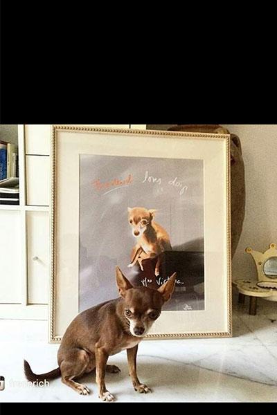 retrato de perro personalizado por Dani Wilde chihuahua 2